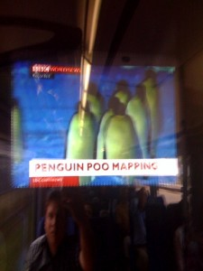 penguin poo mapping